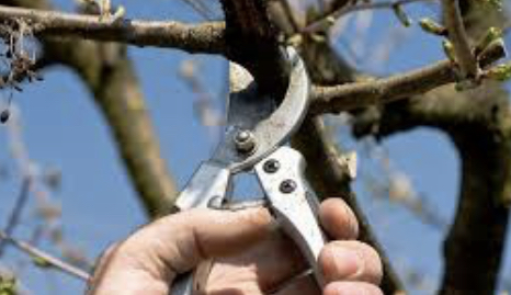 Cleveland Landscaping Tree & Shrub Pruners