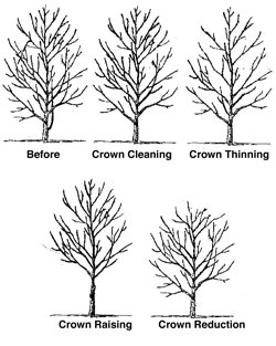 Cleveland Landscaping Dormant Winter Pruning Services