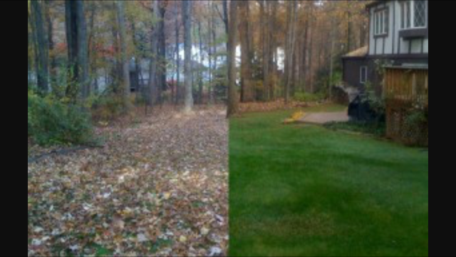 Cleveland Area Landscaping Fall Yard Cleanup