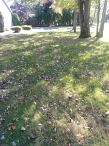 Cleveland Area Fall Yard Clean-up by H&M Landscaping