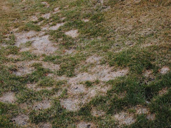 Cleveland Landscaping Lawn Care Snow Mold